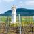 gods torture with vineyard palava czech republic stock photo © phbcz