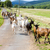 herd of goats on the road aveyron midi pyrenees france stock photo © phbcz