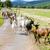 rebanho · estrada · França · agricultura · ao · ar · livre - foto stock © phbcz