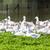 gans · boerderij · Tsjechische · Republiek · vogel · groep · Europa - stockfoto © phbcz