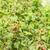 framboise · alimentaire · saine · naturelles · Berry - photo stock © phbcz