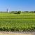 vineyard with windmill near blaignan bordeaux region france stock photo © phbcz