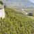 регион · Швейцария · природы · винограда · осень · сельского · хозяйства - Сток-фото © phbcz