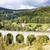 railway viaduct novina krystofovo valley czech republic stock photo © phbcz