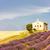 chapelle · lavande · grain · champs · plateau · bâtiment - photo stock © phbcz