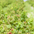 framboise · fruits · domaine · extérieur · Berry - photo stock © phbcz