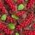 vermelho · groselha · tigela · tabela · fruto · fundo - foto stock © phbcz