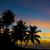 naplemente · Karib · tenger · teknős · tengerpart · fa - stock fotó © phbcz