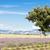 lavendel · veld · boom · Frankrijk · bloem · bomen · planten - stockfoto © phbcz