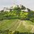 ruins of falkenstein castle with vineyard lower austria austri stock photo © phbcz