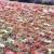 França · flor · natureza · campo · vermelho - foto stock © phbcz