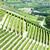 Italië · reizen · Europa · wijnstok · landbouw · natuurlijke - stockfoto © phbcz
