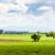 spring lavender field plateau de valensole provence france stock photo © phbcz