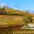 vineyards grand cru in beaujolais witha church fleurie rhone a stock photo © phbcz