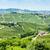 Italië · Europa · wijnstok · landbouw · natuurlijke · buitenshuis - stockfoto © phbcz