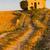 capela · campo · de · lavanda · planalto · flor · edifício · campo - foto stock © phbcz