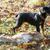 собака · сумку · животного · утки - Сток-фото © phbcz