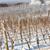 зима · виноградник · южный · Чешская · республика · снега · белый - Сток-фото © phbcz