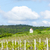 spring vineyard near hnanice southern moravia czech republic stock photo © phbcz