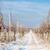 зима · виноградник · южный · Чешская · республика · снега · завода - Сток-фото © phbcz