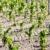 vineyard bordeaux region france stock photo © phbcz