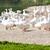 水生の · ファーム · 湖 · 日照 · 水 · 魚 - ストックフォト © phbcz