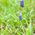 florescimento · flor · jacinto · pote · decorado · musgo - foto stock © phbcz