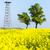 páva · béka · szár · növény · lövés · szilárd - stock fotó © phbcz