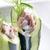 cetriolo · piatto · vegetali · pasto · sani - foto d'archivio © phbcz