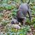 cão · de · caça · caçador · cão · homem · animal · pessoa - foto stock © phbcz