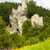 ruínas · castelo · República · Checa · viajar · arquitetura · história - foto stock © phbcz