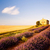 capela · lavanda · grão · campos · planalto · igreja - foto stock © phbcz
