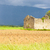 field with a ruin of house and tree plateau de valensole prove stock photo © phbcz