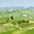 Italia · Europa · agricultura · vina · aire · libre · escénico - foto stock © phbcz