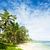 Barbados · Caraibi · albero · panorama · mare · estate - foto d'archivio © phbcz