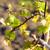 videira · natureza · verde · planta · agricultura - foto stock © phbcz