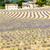 lawendowe · pole · Francja · obraz · region · południowy · wietrzny - zdjęcia stock © phbcz
