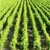 vina · Francia · fondo · planta · vid · agricultura - foto stock © phbcz