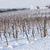 winter vineyard near hnanice southern moravia czech republic stock photo © phbcz