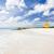 ビーチ · バルバドス · カリビアン · ツリー · 風景 - ストックフォト © phbcz