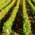 vina · Francia · fondo · planta · agricultura · aire · libre - foto stock © phbcz