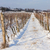 winter vineyard southern moravia czech republic stock photo © phbcz