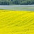 フィールド · 道路 · 空 · 花 · 春 - ストックフォト © phbcz