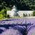 修道院 · ラベンダー畑 · フランス · 世界 · 有名な - ストックフォト © phbcz