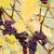 grapes agostenga rosa germany stock photo © phbcz
