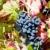 sonbahar · bağ · Portekiz · doğa · manzara · meyve - stok fotoğraf © phbcz