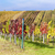 view of autumnal vineyards near velke bilovice czech republic stock photo © phbcz