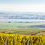 view of autumnal vineyards near palava czech republic stock photo © phbcz