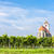 Церкви · виноградник · снизить · Австрия · здании · путешествия - Сток-фото © phbcz