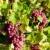 vinha · França · folha · outono · uvas - foto stock © phbcz